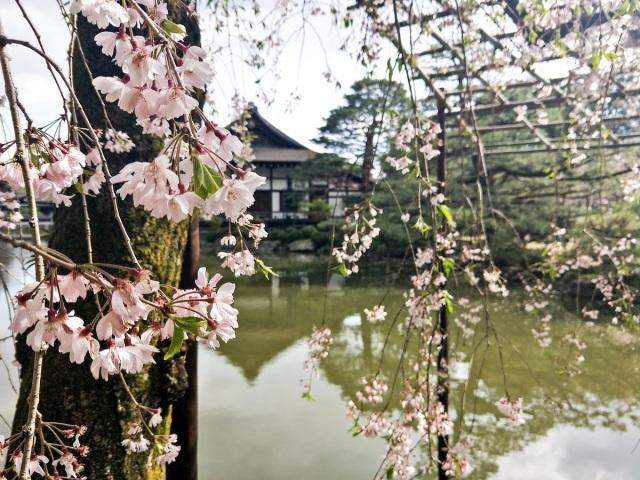 Heian Shrine gardens in Kyoto
